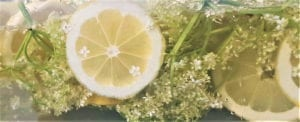 Elderflower cordial infusing